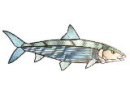 1720/Hand-Cut-Stained-and-Fused-Glass-Bonefish