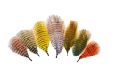 2406/MFC-Mini-Barred-Marabou