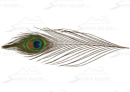 2848/Spirit-River-UV2-Peacock-Eyes