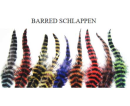 5592/MFC-Barred-Schlappen