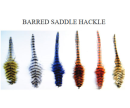 5594/MFC-Barred-Strung-Saddle-Hackle