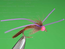 6239/UV2-Steelhead-Pheasant-Tail-Purple
