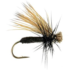 Black Foam Caddis